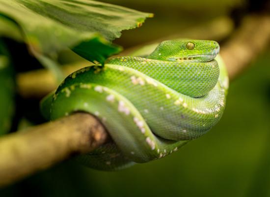 fobia-a-las-serpientes