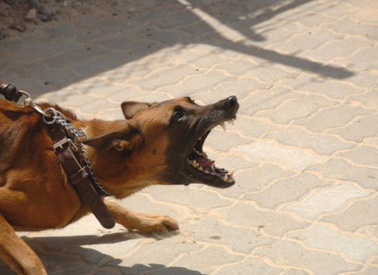 miedo-a-los-perros